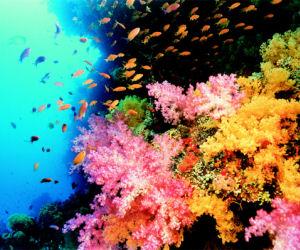 750.000 άγνωστα είδη ζουν στους ωκεανούς