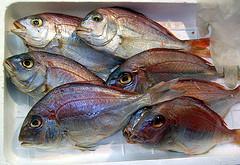Τα ψάρια (όχι τηγανητά) μειώνουν τον