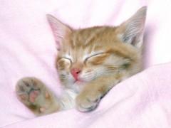 40b3847d26ed Αλλεργίες  Βγάλτε τη γάτα από την κρεβατοκάμαρα! - HealthyLiving.gr