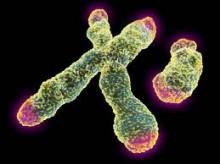 telomererh