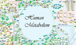 anuropinos metabolismos