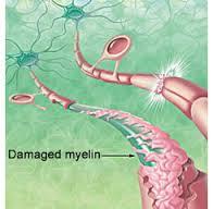 myelinh