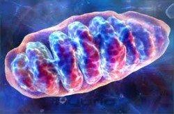 mitoxondrio