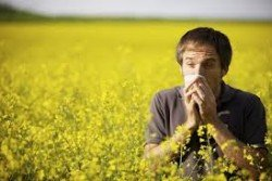 allergia andras