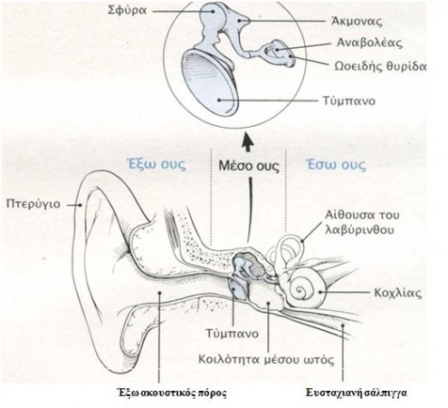 anatomia aftiou