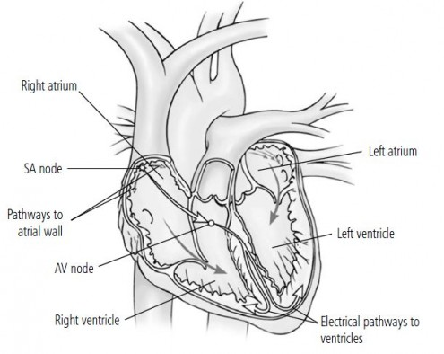 electrical system heart