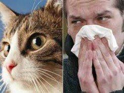 gata allergia 4