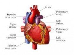 heart 2014