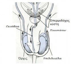 andriko systhma1