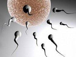sperma gonimothta 4