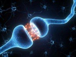 synapsi