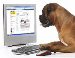 facebook for dogs
