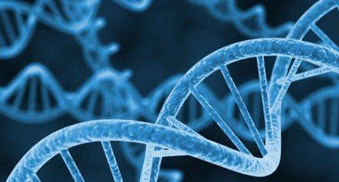 DNA_05502