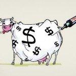 hormone-inje555cted-money-cow