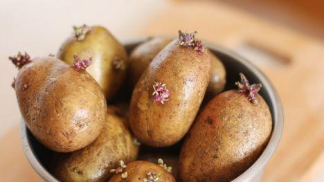 patates 5 5