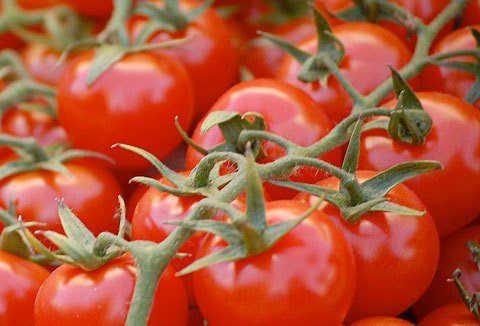 tomatdddoes-vine