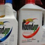 when-plant-after-usi555ng-roundup-1