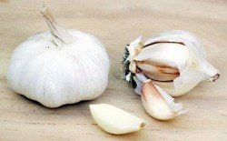 Garlic_2015522_b2