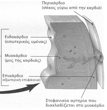 perikardio55