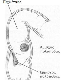 polypodas 5