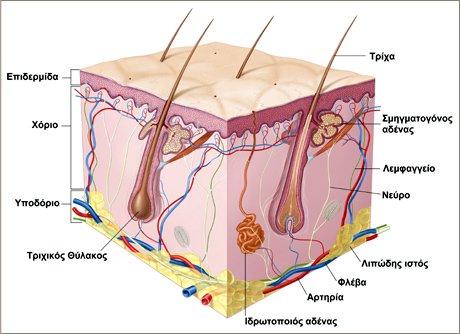 dermatologia-n555ew