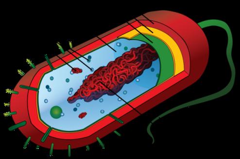 Mycoplasma-genitalium5