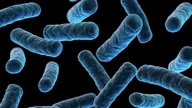 microbia anthektika 5