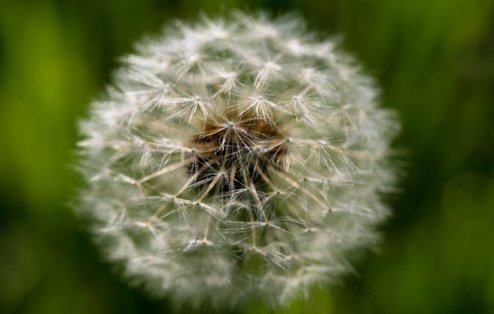 allergies_6