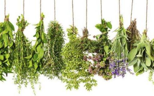 votana 6 herbs