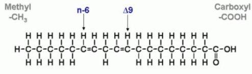 linoleiko oxy