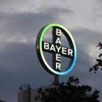 bayer6 h