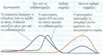 emmhnopausi1