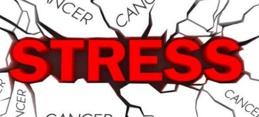 stress karkinos 6