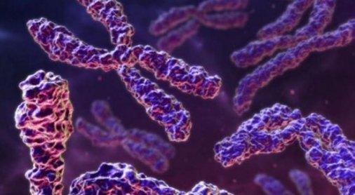 xromosomata 5 6