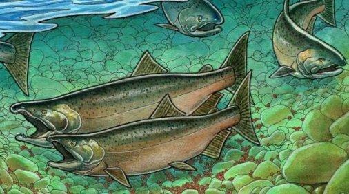 solomos-salmon