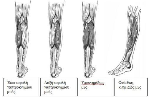 botox-diagramma