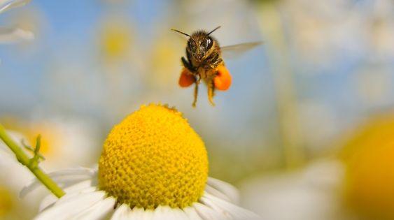 Μέλι: To 75% των δειγμάτων περιέχουν νεονικοτινοειδή φυτοφάρμακα