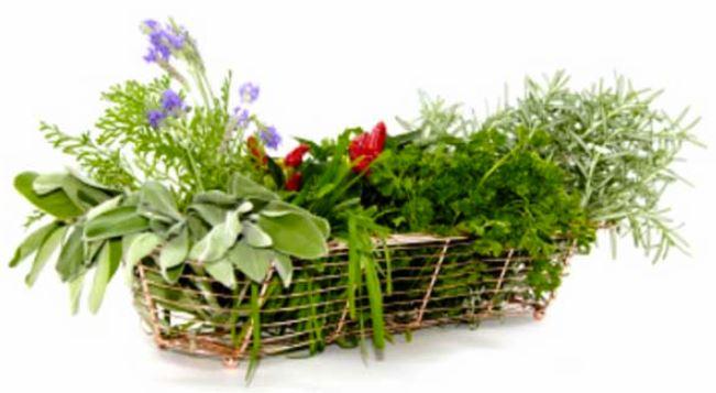 Υπερτροφές της μεσογειακής διατροφής: Χαρουπάλευρο, μαραθόριζα, μελισσόχορτο